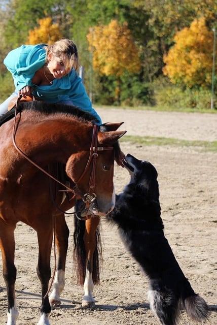 unruhiges Pferd